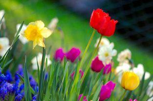 1200px-Colorful_spring_garden.jpg
